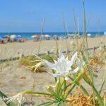 tutti-al-mare-sulla-spiaggia-salentina