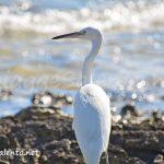 natura sul mare del Salento